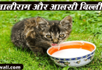 tenalirama-aur-aalsi-billi-hindi-story